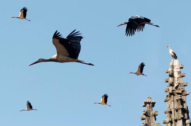 Plasencia potencia el turismo ornitol gico con seis puntos for Oficina de turismo de plasencia