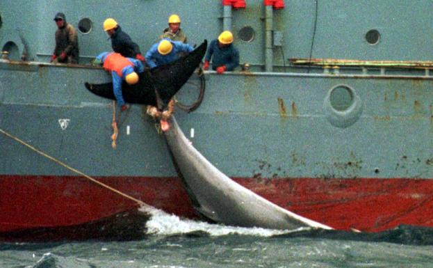 Resultado de imagen para caza de ballenas japon